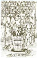 Gravure du XV ème siécle
