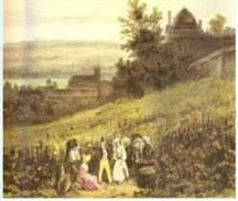 Vendange sous la terrasse du chateau de Saint-Germain-en-Laye (A. Bichebois 1830)